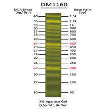 DM1160 FluoroBand 50 bp Fluorescent DNA Ladder
